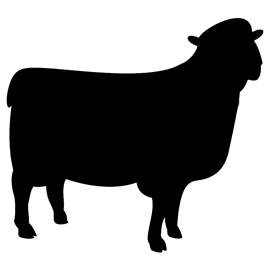 Image of Sheep Shaped Chalkboard